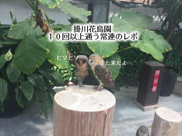 掛川花鳥園 10回以上通う常連のレポ