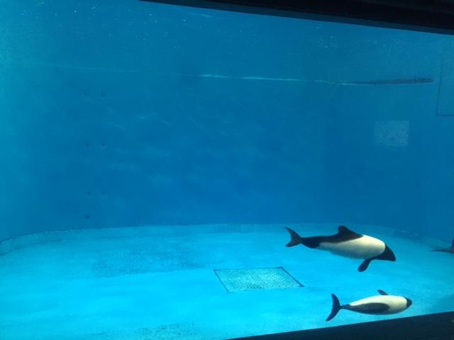 鳥羽水族館のイルカの水槽