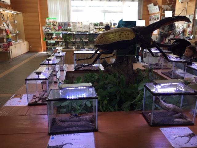 竜洋昆虫自然観察公園のカブトムシ、クワガタコーナー