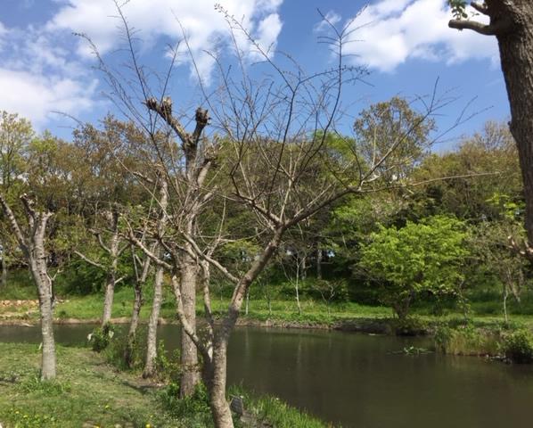 竜洋昆虫自然観察公園の池