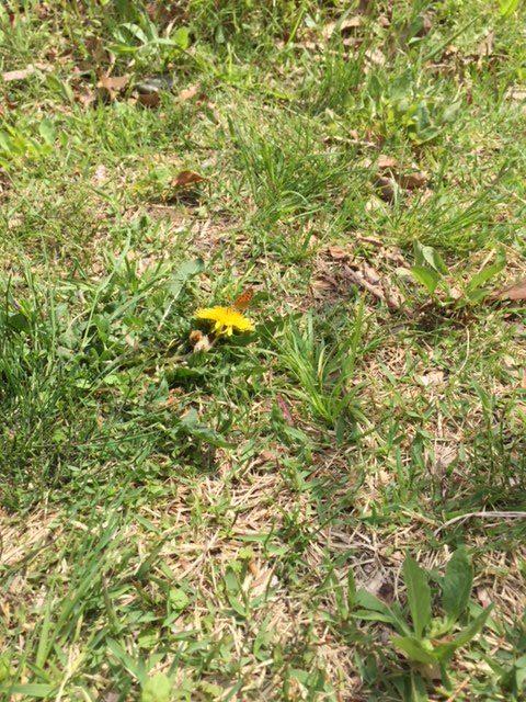 竜洋昆虫自然観察公園で見つけたチョウ