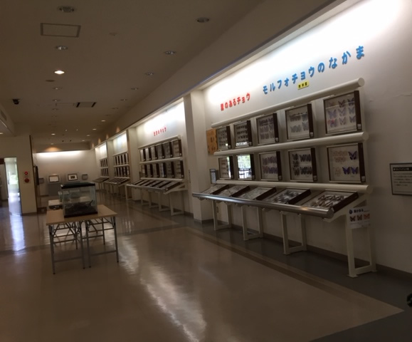 竜洋の昆虫公園の標本室