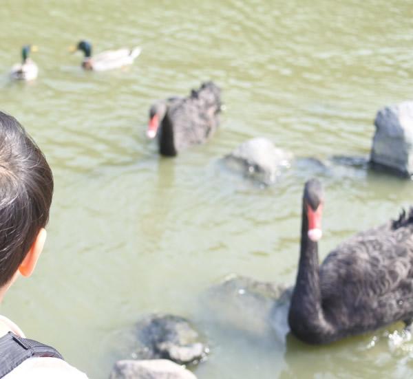 掛川花鳥園の屋外エリア(白鳥の池)