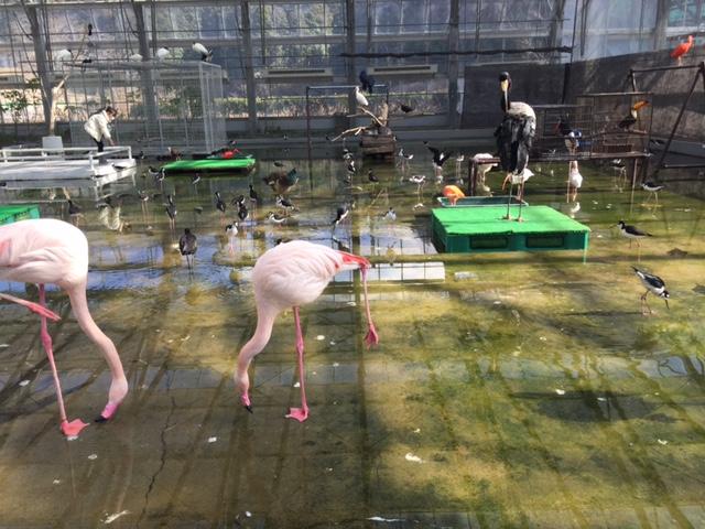 掛川花鳥園(フラミンゴ)