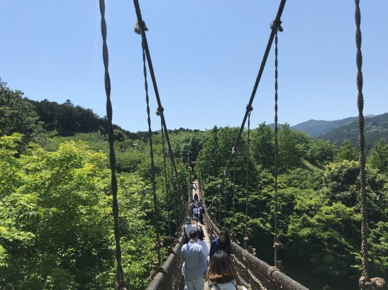 小田原こどもの森公園わんぱくらんどのわんぱく大橋からの景色
