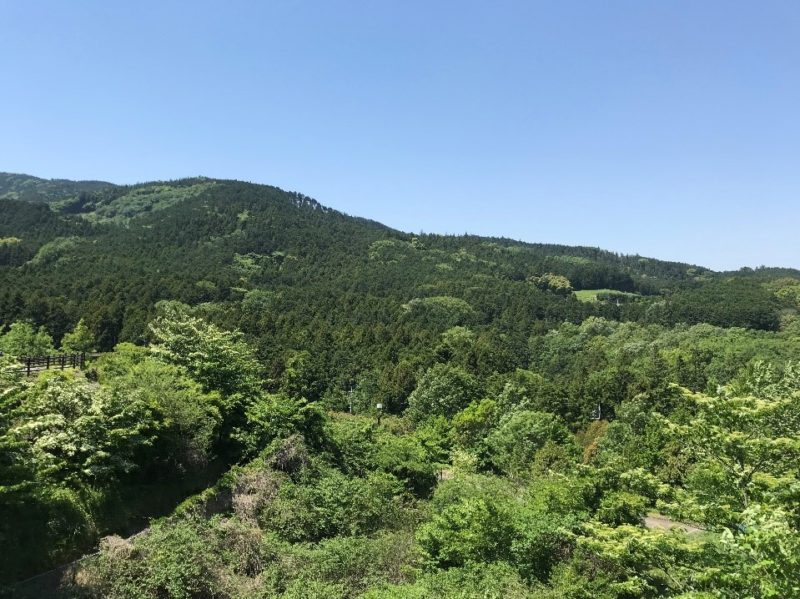 小田原こどもの森公園わんぱくらんどのわんぱく大橋から見える山の景色