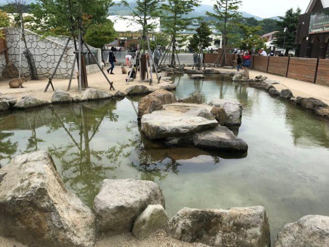 那須どうぶつ王国のカピバラの温泉
