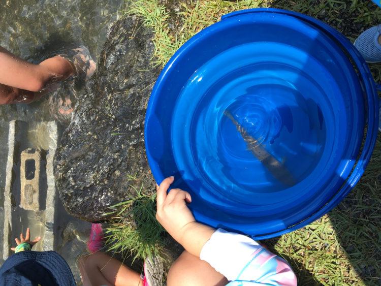 白川渡オートキャンプ場で捕まえた魚