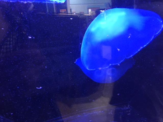 竹島水族館のクラゲ