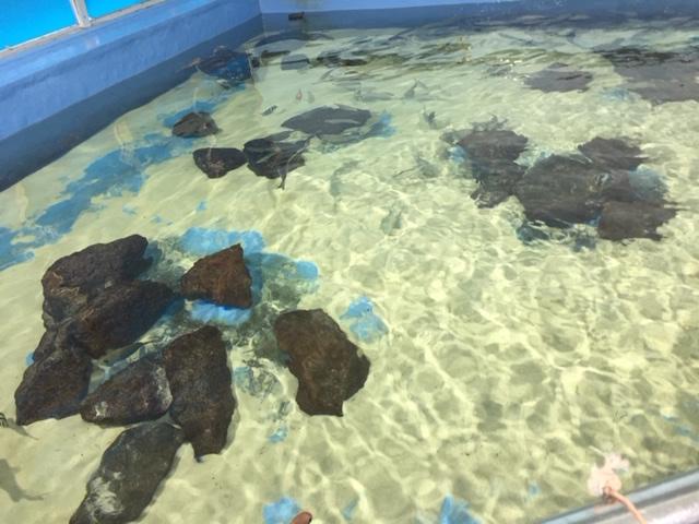 竹島水族館のカメ