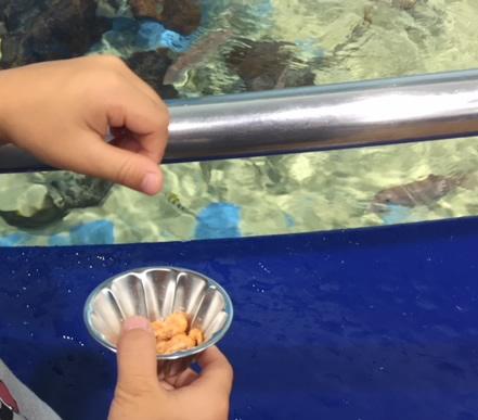 竹島水族館のエビのエサ