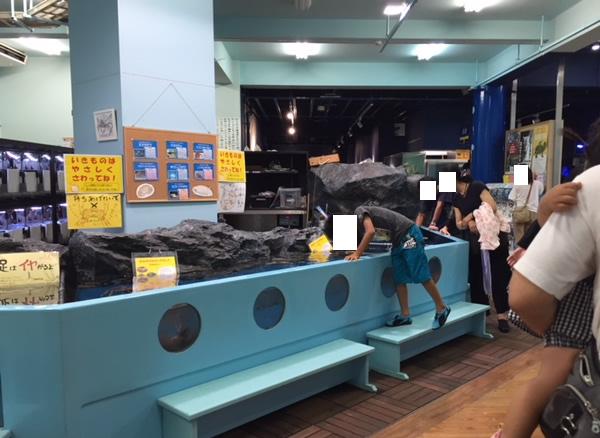竹島水族館のタッチングプール
