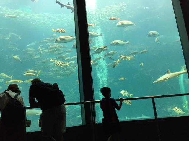 下田海中水族館、アクアドームペリー号の巨大水槽