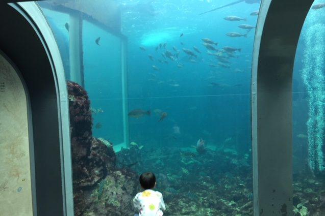 下田海中水族館のアクアドリームペリー号