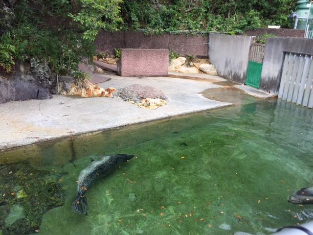 下田海中水族館のアザラシ