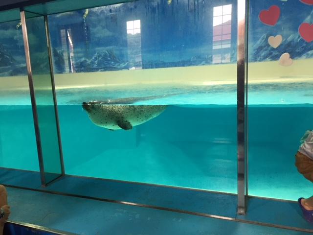 下田海中水族館のゴマアザラシ