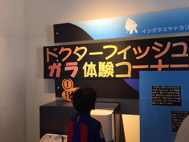 下田海中水族館のドクターフィッシュ体験コーナー