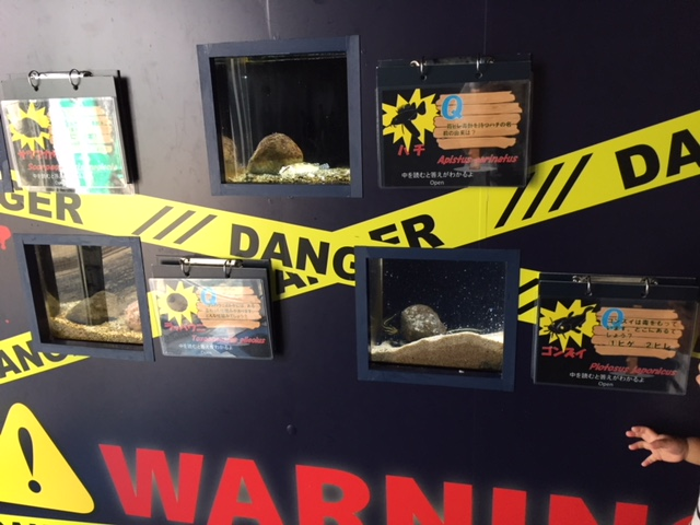 下田海中水族館の危険性物展示コーナー
