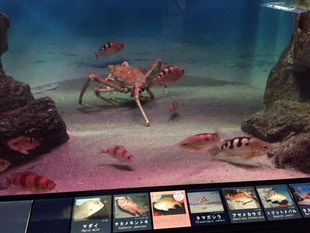 下田海中水族館の深海生物コーナー