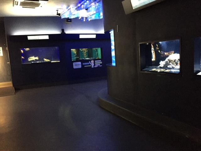 下田海中水族館の深海魚コーナー