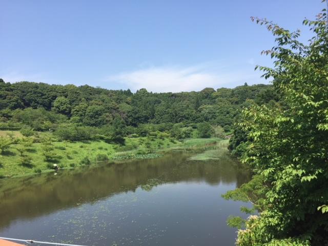 都田公園の池