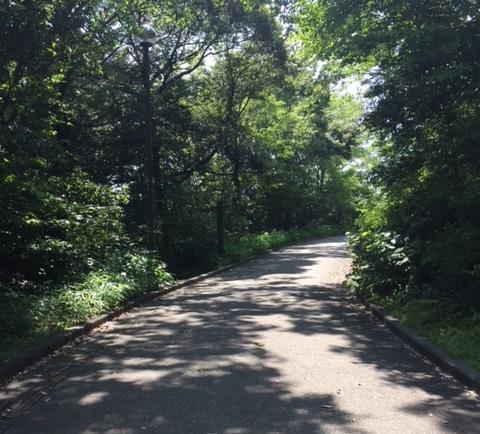 都田公園の山道