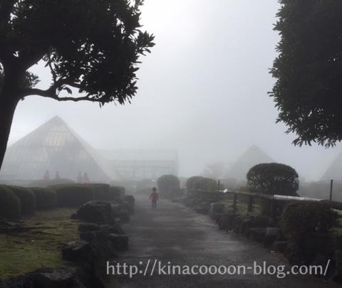 伊豆シャボテン公園の霧