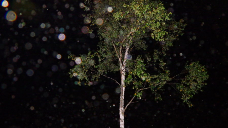 南乗鞍キャンプ場の夜