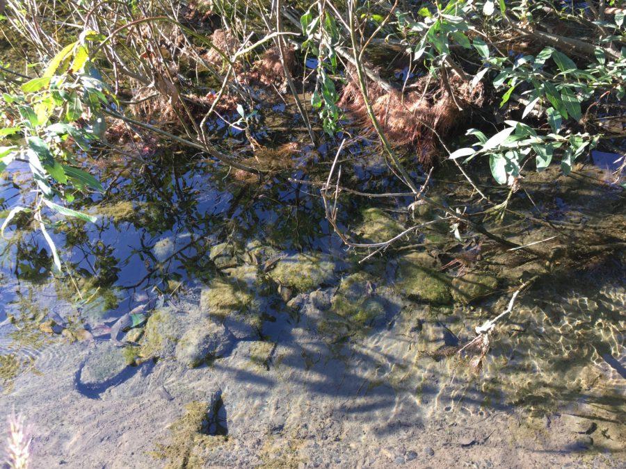 ならここの里キャンプの川の透明度