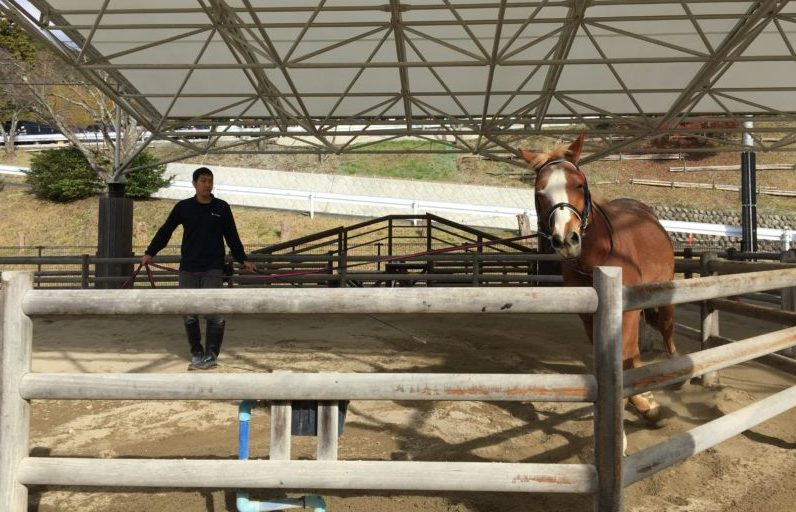 日本平動物園の乗馬体験