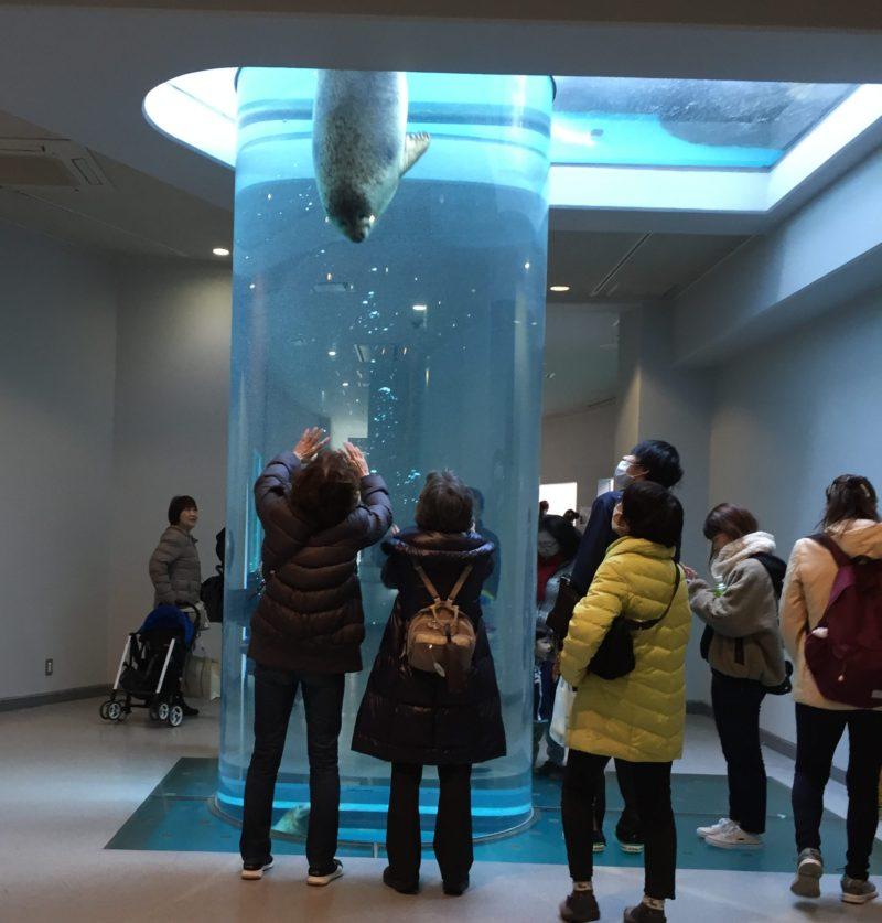 日本平動物園のアシカ