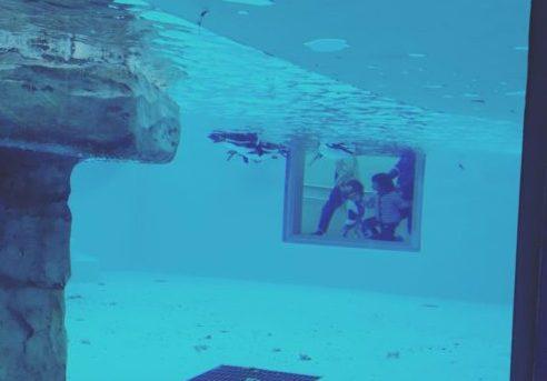 ペンギンの水槽を横から見る