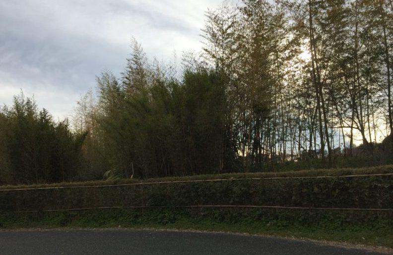 ガーデンパークの竹林