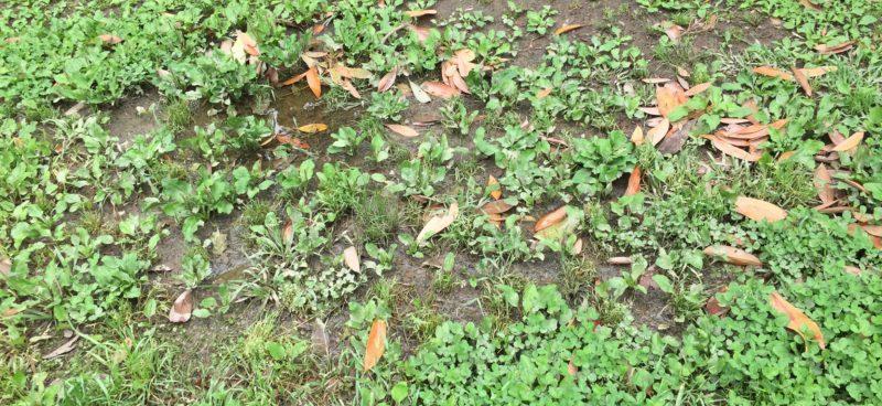 大蒲公園の水たまり