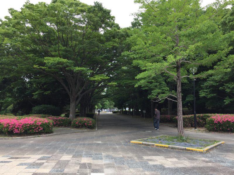 かぶと塚公園の並木道