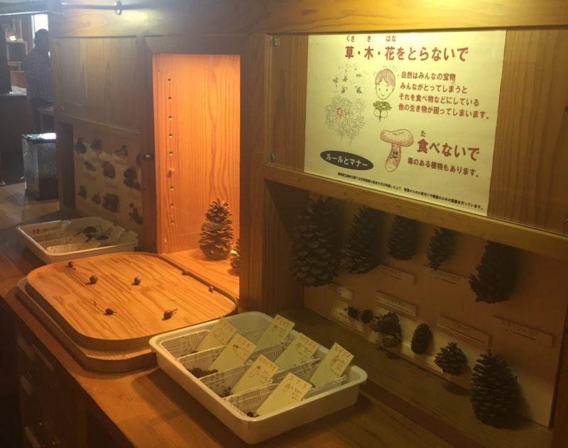 バードピア浜北の体験コーナー(まつぼっくりの大きさ比べの展示)