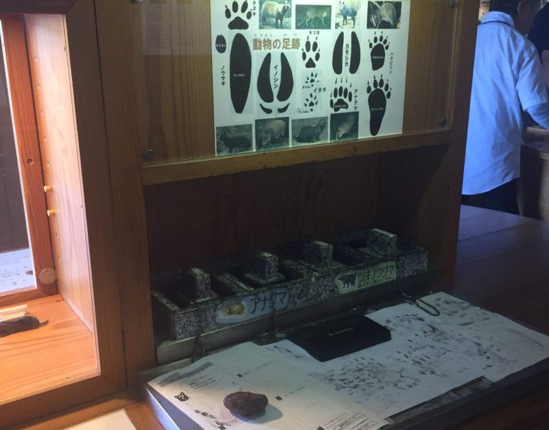 バードピア浜北の体験コーナー(動物のあしあと比べ)