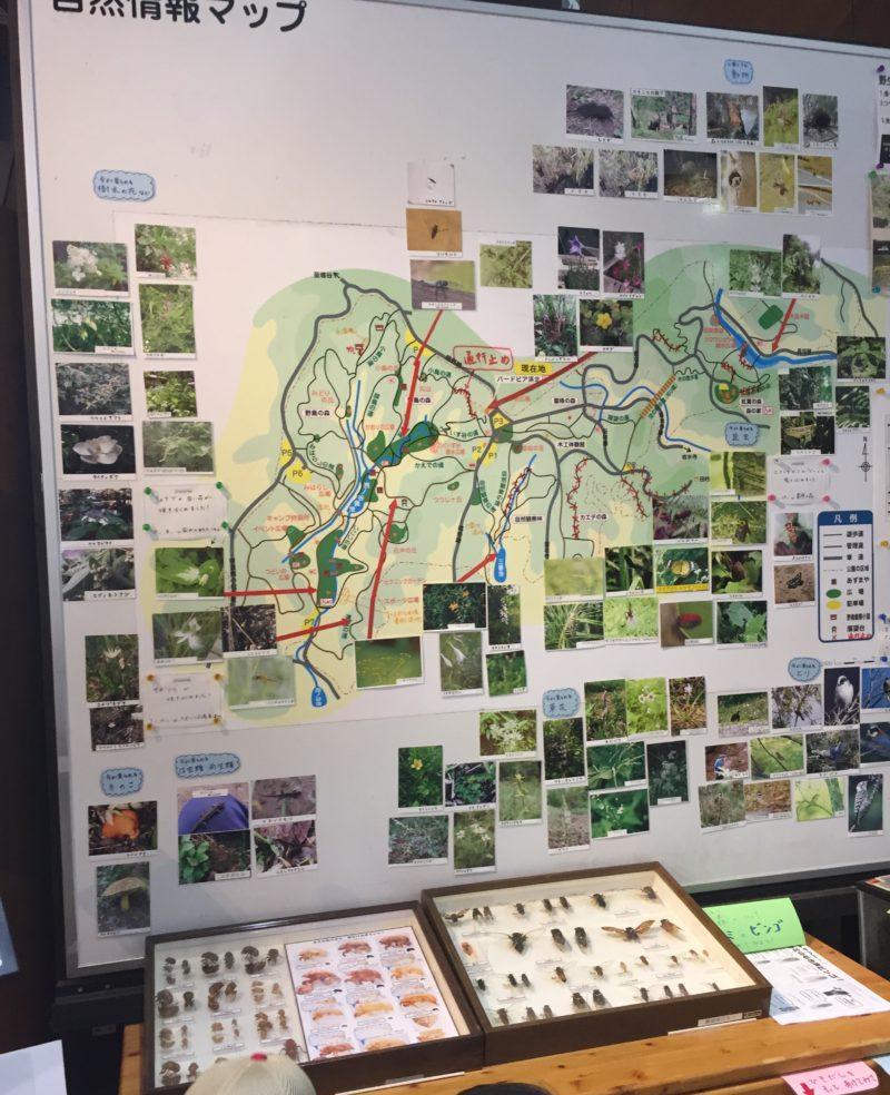 自然観察マップ