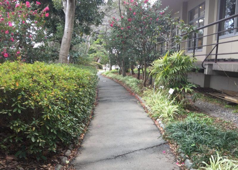 飯田公園の草木道