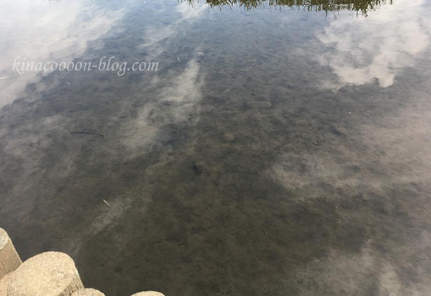 今ノ裏川の水は少し汚い