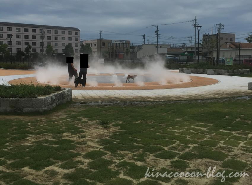 今之浦公園の噴水広場で遊ぶ犬連れの夫婦